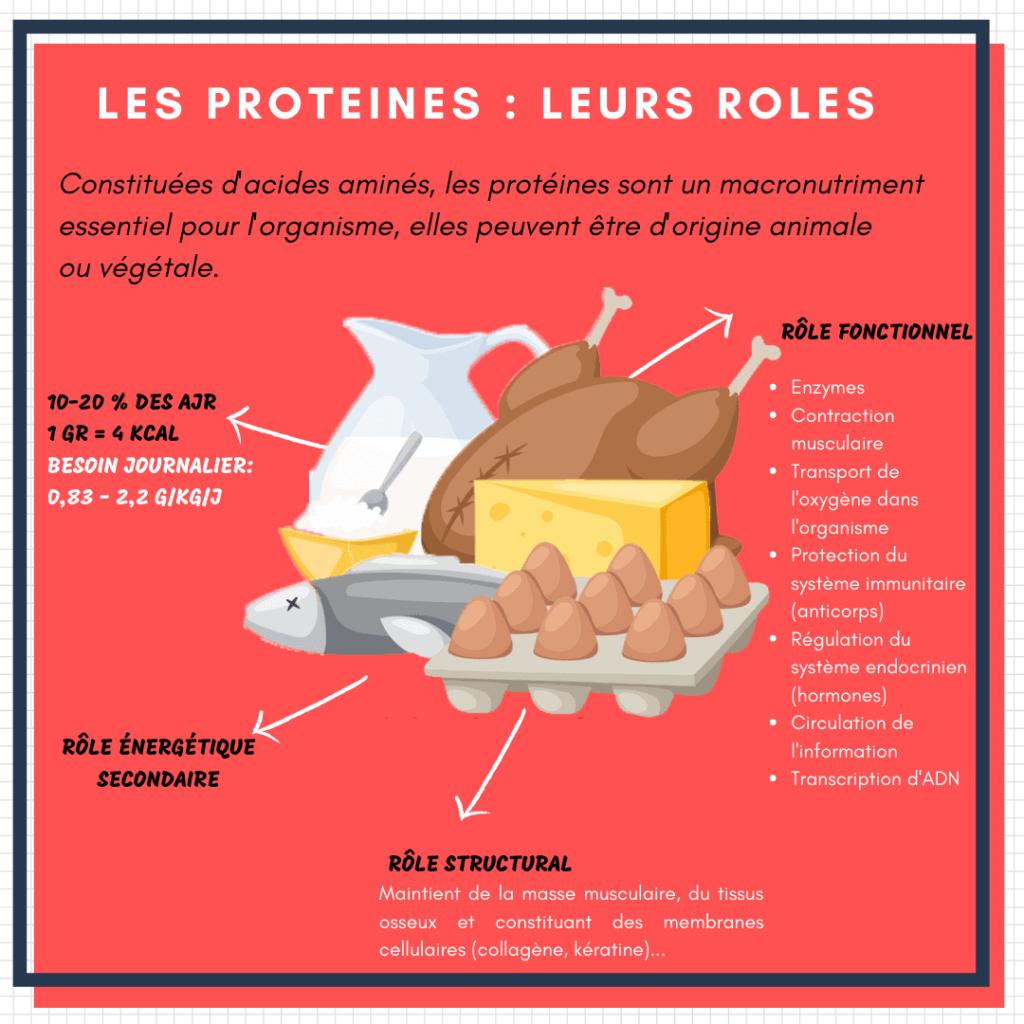 infographie le rôle des protéines