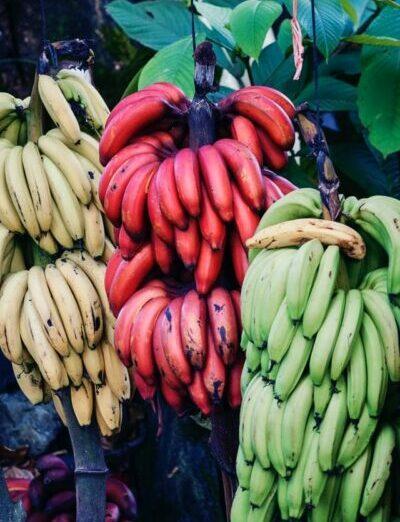 différentes sortes de bananes