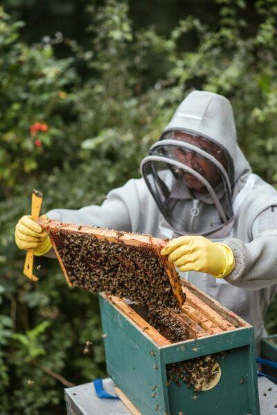 apiculteur et ses abeilles