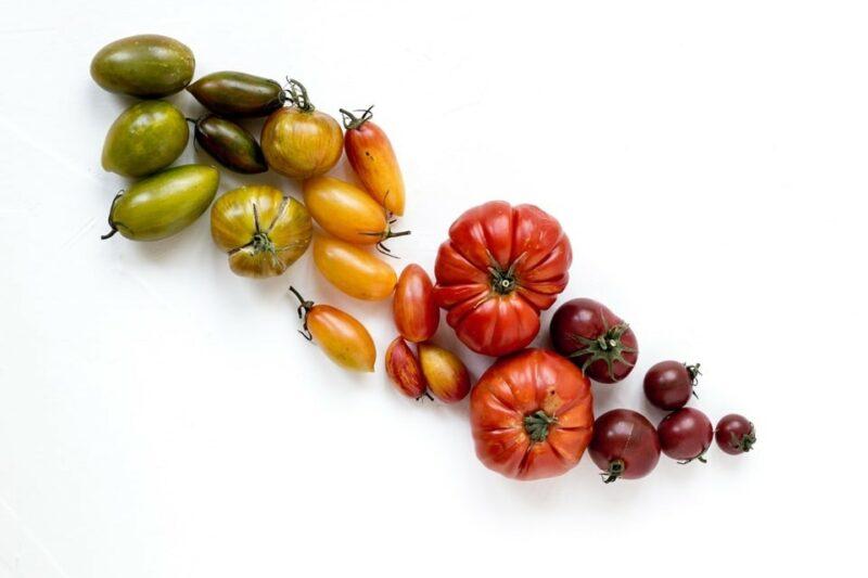 tomates colorées en dégradé du vert au violet